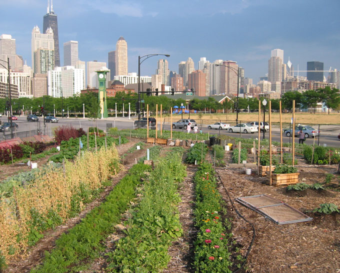 Proposed City Ordinance Could Slow Chicago's Urban Farm Growth